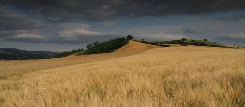 Paesaggi di grano, Marco Monari