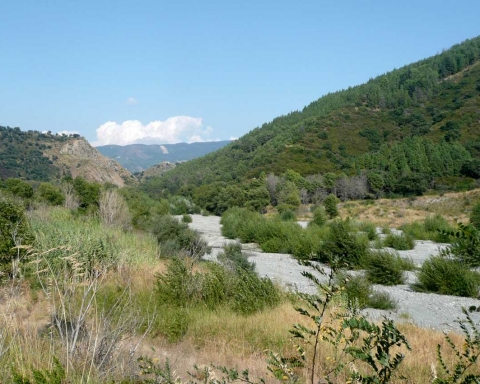 L'alveo del fiume Oliva