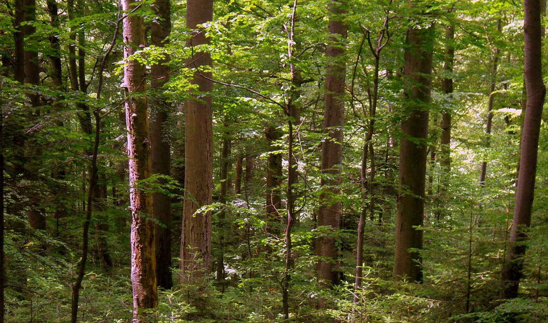 Testo unico sulle foreste, rischio distruzione per i boschi italiani