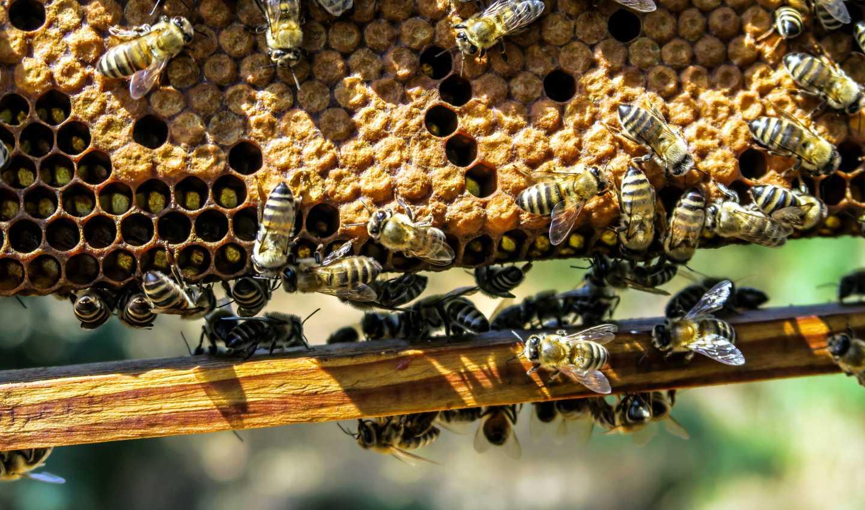 Petrolio in Basilicata, tracce di idrocarburi nel miele